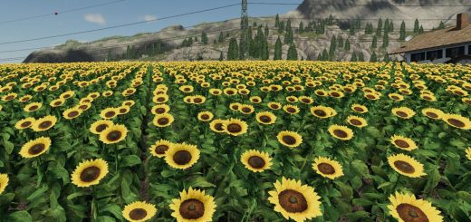 Forgotten Plants - Sunflower/Canola v 1.0