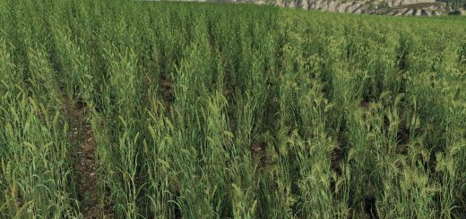 Forgotten Plants - Wheat / Barley v 1.0