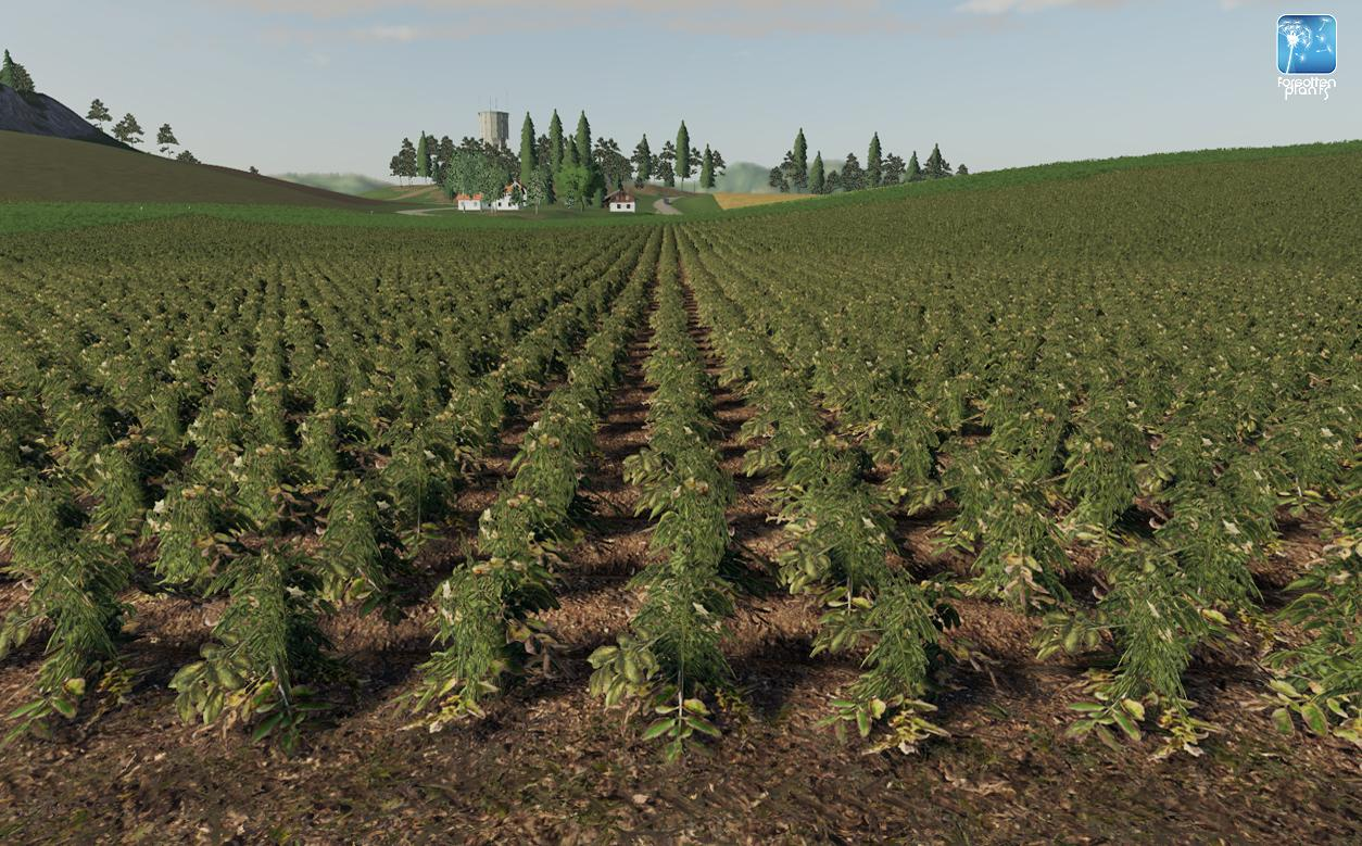 Forgotten Plants - Potato / Sugarbeet / Oilseed Radish v 1.0