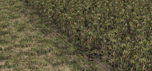 Oat, Soybean, Oilseed radish, Sugar Beet v1.0