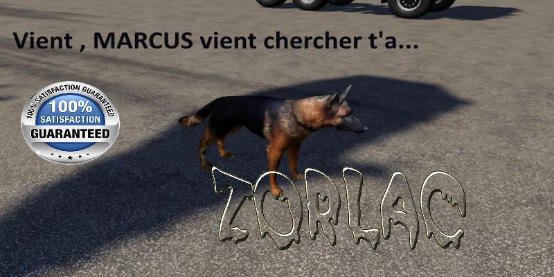 THE MARCUS DOG V1.5
