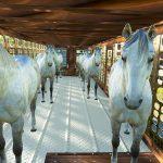 SILVERSTAR HORSE TRAILER V1.0